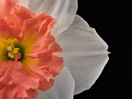 Suchoff-Flower-2
