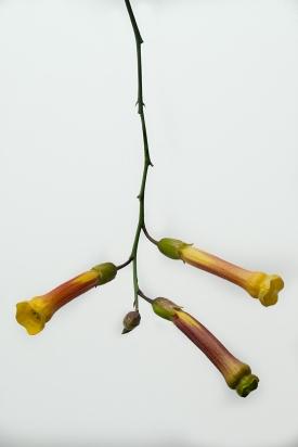 Suchoff-Flower-4