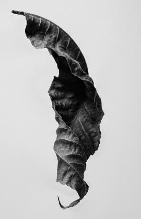 Suchoff-Leaf